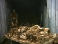 Cameroon Metal scraps